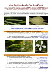 Clef des Brassicacées (ex Crucifères) - Faune Flore du Massif Central
