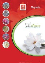 Magnolia - Pépinières du Val d'Erdre