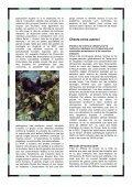 Grands singes, un devoir de famille - panda magazine - WWF France - Page 6