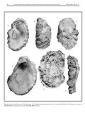 Cretaceous oysters of SE Africa.cdr - Durban - Page 3