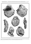 Cretaceous oysters of SE Africa.cdr - Durban - Page 4