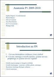 Anatomie P1 2009-2010 Introduction au SN - Free