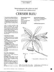 CERISIER BLEU - Bois et forêts des tropiques