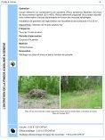 Pinède à molinie - Etat de Genève - Page 6