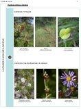 Pinède à molinie - Etat de Genève - Page 7