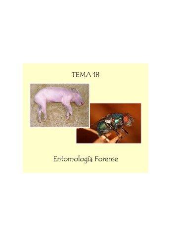 TEMA 18 Entomología Forense TEMA 18 Entomología ... - sisman
