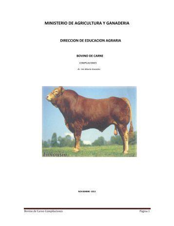 bovino de carne - BibliotecaDeaMag