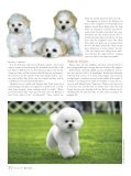 to read an article about care and the Bichon Personality from the - Page 5