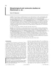 Morphological and molecular studies on Resinicium s. str.