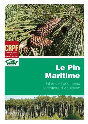 Le pin maritime : pilier de l'économie forestière d'Aquitaine