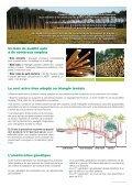 Le pin maritime : pilier de l'économie forestière d'Aquitaine - Page 2
