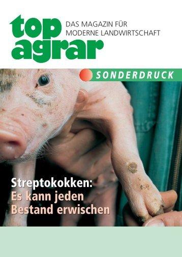 Streptokokken: Es kann jeden Bestand erwischen - Animal-Health ...