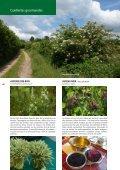 Nature Cueillettes gourmandes aux quatre saisons - Page 4