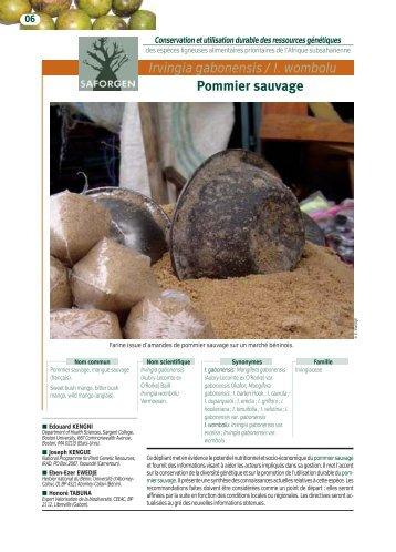 Irvingia gabonensis/I. wombolu Pommier sauvage - Bioversity ...