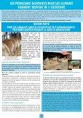 Bulletin N°55 - Veau sous la Mère - Page 5