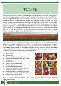 Cataloque bulbes automnaux 2012 - Brageirac Fleuri - Page 4