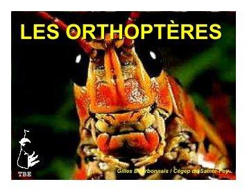 LES ORTHOPTÈRES - Cégep de Sainte-Foy