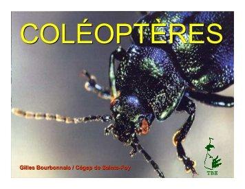 Coléoptères - Cégep de Sainte-Foy
