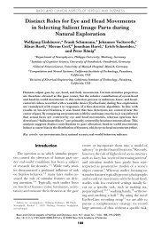 Distinct Roles for Eye and Head Movements in ... - Cognitive Science