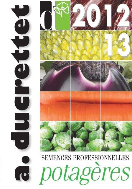 Salade BIO-Moutarde Rouge Violet Osaka 50g de graines-paquet en vrac