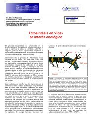 Fotosíntesis en Vides de interés enológico - Grupo de Investigación ...