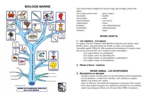 Biologie pdf englische sofa