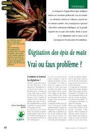 226 - Digitation des épis de maïs - Base de données FNPSMS