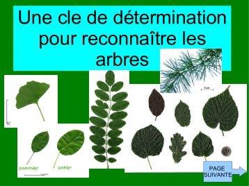 Comment reconna tre les arbres en hiver association foresti re - Comment reconnaitre des couverts en argent ...