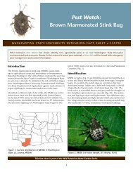 Pest Watch: Brown Marmorated Stink Bug - Washington State ...