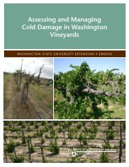 Assessing and Managing Cold Damage in Washington Vineyards