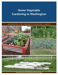 Home Vegetable Gardening in Washington - Washington State ...