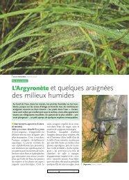 Argyronète et araignées des milieux humides / Insectes n° 151 - Inra