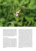 L'argiope - Vents du Morvan - Page 3