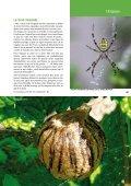 L'argiope - Vents du Morvan - Page 4