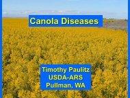 Canola Diseases