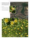 An infestation of Ficaria verna (formerly Ranunculus ficaria ... - Page 2