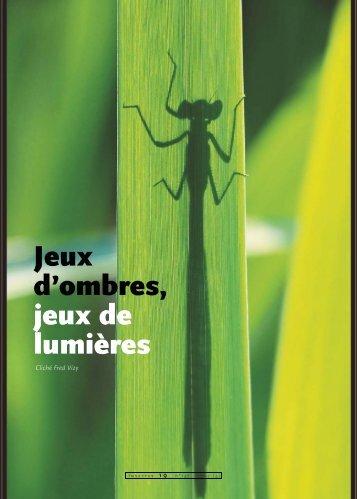 Jeux d'ombres / Insectes n° 147