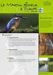Le martin pêcheur - Parc naturel régional des Vosges du Nord