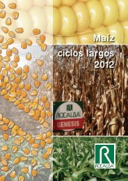 Maíz ciclos largos 2012 - Rocalba