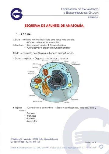 Esquema de apuntes de Anatomía y Fisiología