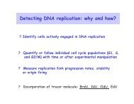 Detecting DNA replication: why and how? - Events