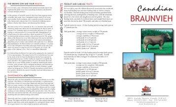 Braunvieh Brochure.indd - Canadian Brown Swiss & Braunvieh ...