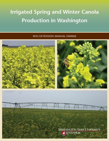 Irrigated Spring and Winter Canola Production in Washington