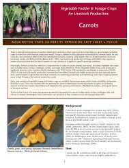 Vegetable fodder and forage crops for livestock production: Carrots