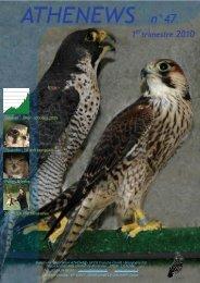 athenews 47 - Centre ATHÉNAS – Soins aux animaux sauvages