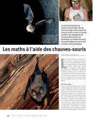 Les maths à l'aide des chauves-souris (PDF, 131 KB)