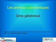 Les animaux planctoniques