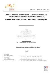 bases anatomiques et pharmacologiques - OATAO