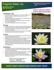 Fragrant Water Lily - WSU Extension Counties - Washington State ...