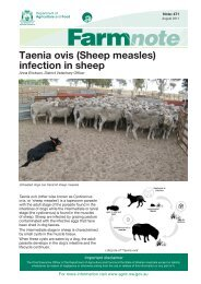 Taenia ovis (Sheep measles) infection in sheep - Department of ...